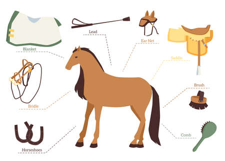 Set of horse care and equestrian ride elements, flat vector illustration isolated on white background. Accessories for care of horse and horse harness. Иллюстрация