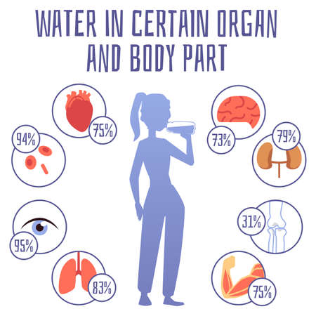 Water in certain organ and body part infographic banner template, flat vector illustration isolated on white background. Medical poster showing effect of water on health.