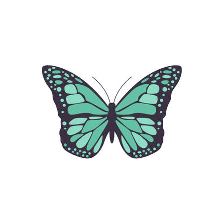 Icon of black butterfly with a beautiful symmetrical blue pattern on wings. Vector isolated illustration for logo, emblem or web design.