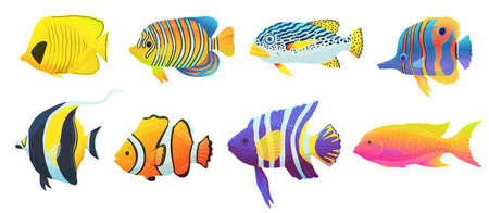 Set of colorful tropical caribbean fish. Exotic bright underwater animals wildlife of ocean. Flat cartoon vector illustrations isolated on a white background.