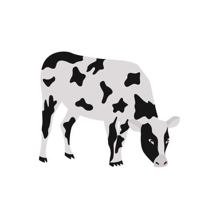 Cow cartoon character grazing in meadow, flat vector illustration isolated on white background. Simple image of cow for farm milk and meat production packaging.