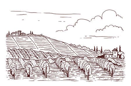 Countryside landscape with vineyard or vine fields, cartoon vector illustration in line engraving style isolated on white background. Etching print of vine plantation.