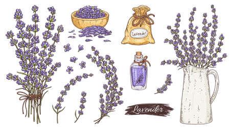 Colorful lavender plant parts set, ink engraving vector illustration isolated. Vektoros illusztráció