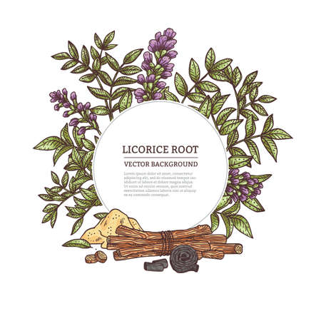Medicine plant licorice herb with root, flower, leaves and branches.