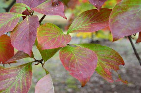leaf in color transition