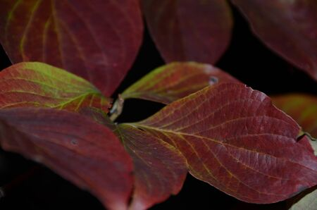 Leaves in color transition