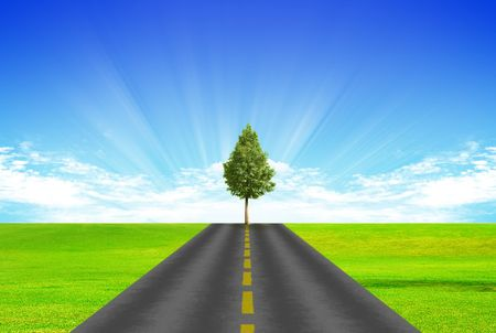 Road with yellow dividing stripon background of green grass and blue sky. The tree is on the road. Stock Photo