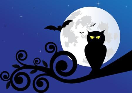 night owl: Owl Illustration