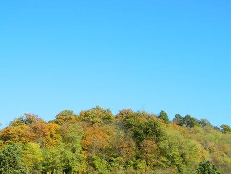 naranja arbol: los �rboles en oto�o de paisaje hermoso de temporada. Foto de archivo