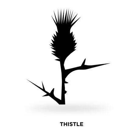 thistle silhouette Vector illustration.