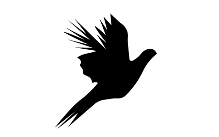 Flying pheasant silhouette on white background.