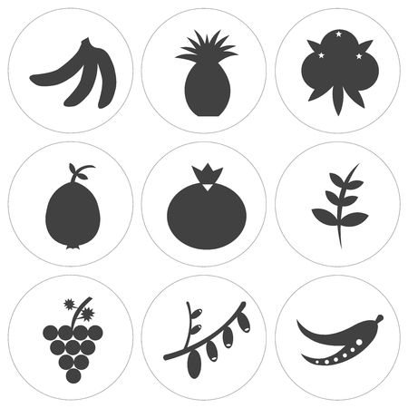 Set of 9 simple editable fruit and vegetable icons