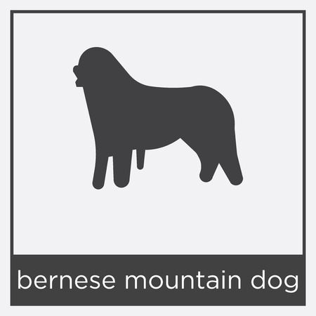 bernese mountain dog icon isolated on white background with gray frame, sign and symbol