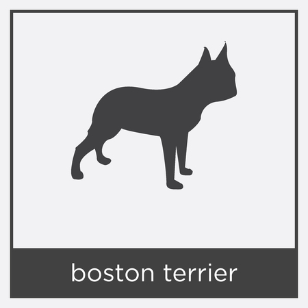 boston terrier icon isolated on white background with gray frame, sign and symbol Illusztráció