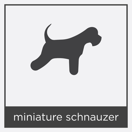 miniature schnauzer icon isolated on white background with gray frame, sign and symbol
