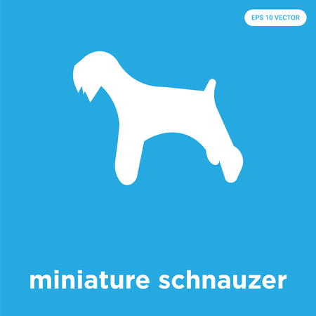 miniature schnauzer vector icon isolated on blue background, sign and symbol