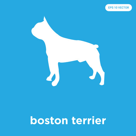 boston terrier vector icon isolated on blue background, sign and symbol