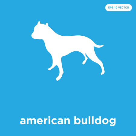 american bulldog vector icon isolated on blue background, sign and symbol