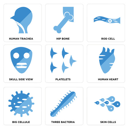 Set of 9 simple editable icons such as skin cells, three bacteria, big cellulose, human heart, platelets, skull side view, rod cell, hip bone, trachea, can be used for mobile, web. Ilustração