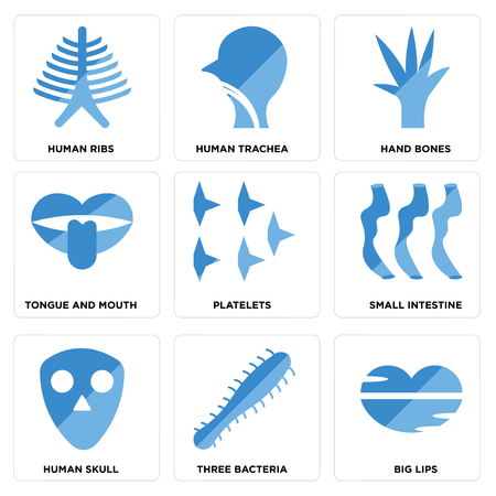 Set Of 9 simple editable icons such as Big Lips, Three Bacteria, Human Skull, Small Intestine, Platelets, Tongue and Mouth, Hand Bones, Trachea, Ribs, can be used for mobile, web Vectores