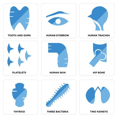 Set Of 9 simple editable icons such as Two Kidneys, Three Bacteria, Thyroid, Hip Bone, Human Skin, Platelets, Trachea, Eyebrow, Tooth and Gums, can be used for mobile, web