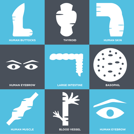 Set Of simple editable icons such as Human Eyebrow, Blood Vessel, Muscle, Basophil, Large Intestine, Skin, Thyroid, Buttocks, can be used for mobile, web. Illustration