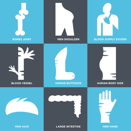 Set Of 9 simple editable icons such as Men Hand, Large Intestine, Hair, Human Body Side, Buttocks, Blood Vessel, Supply System, Shoulder, Bones Joint. Can be used for mobile, web.