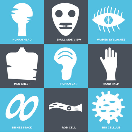 Set Of 9 simple editable icons such as Big Cell, Rod Cell, Dishes Stack, Hand Palm, Human Ear, Men Chest, Women Eyelashes, Skull Side View, Head. Can be used for mobile, web.