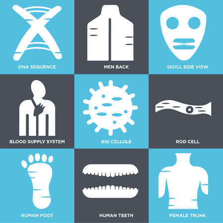 Set Of 9 simple editable icons such as Female Trunk, Human Teeth, Foot, Rod Cell, Big Cell, Blood Supply System, Skull Side View, Men Back, DNA Sequence. Can be used for mobile, web.
