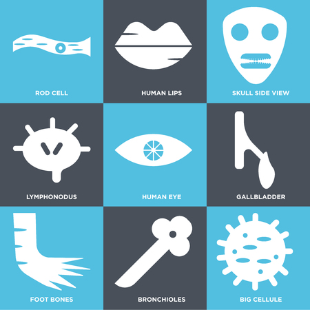 Set Of 9 simple editable icons such as Big Cell, Bronchioles, Foot Bones, Gallbladder, Human Eye, Lymphonodus, Skull Side View, Lips, Rod Cell. Can be used for mobile, web.