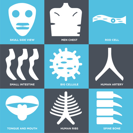 Set Of 9 simple editable icons such as Spine Bone, Human Ribs, Tongue and Mouth, Artery, Big Cellule, Small Intestine, Rod Cell, Men Chest, Skull Side View, can be used for mobile, web