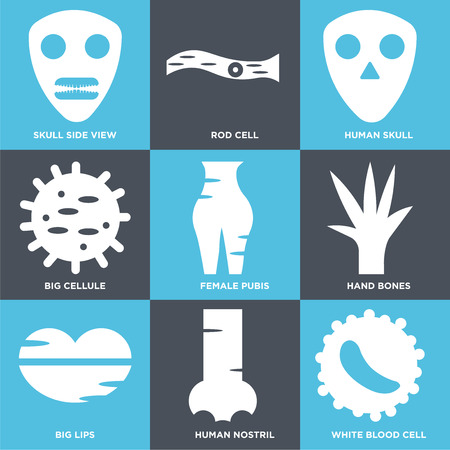 Set Of 9 simple editable icons such as White blood cell, Human Nostril, Big Lips, Hand Bones, Female Pubis, Cell, Skull, Rod Cell, Skull Side View. Can be used for mobile, web. Ilustração