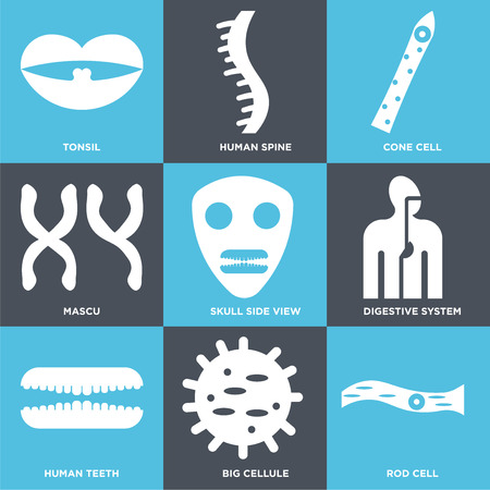 Set Of 9 simple editable icons such as Rod Cell, Big Cell, Human Teeth, Digestive System, Skull Side View, Cone Spine, Tonsil. Can be used for mobile, web.