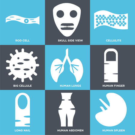 Set Of 9 simple editable icons such as Human Spleen, Abdomen, Long Nail, Finger, Lungs, Big Cell, Cellulite, Skull Side View, Rod Cell. Can be used for mobile, web.