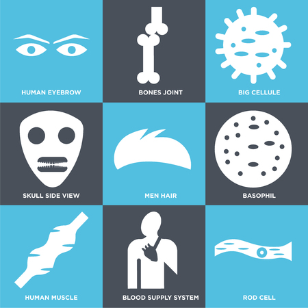 Set Of 9 simple editable icons such as Rod Cell, Blood Supply System, Human Muscle, Basophil, Men Hair, Skull Side View, Big Cellule, Bones Joint, Eyebrow, can be used for mobile, web