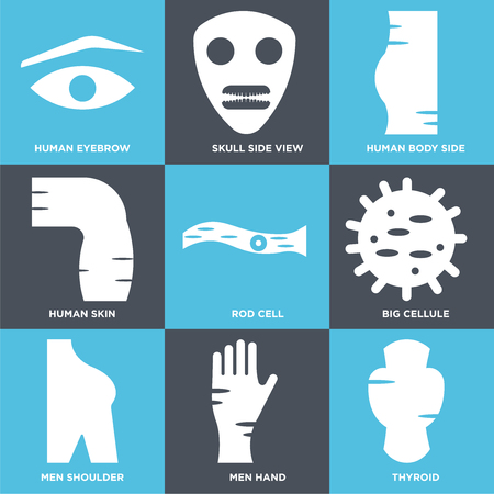 Set Of 9 simple editable icons such as Thyroid, Men Hand, Shoulder, Big Cellule, Rod Cell, Human Skin, Body Side, Skull Side View, Eyebrow, can be used for mobile, web Ilustração