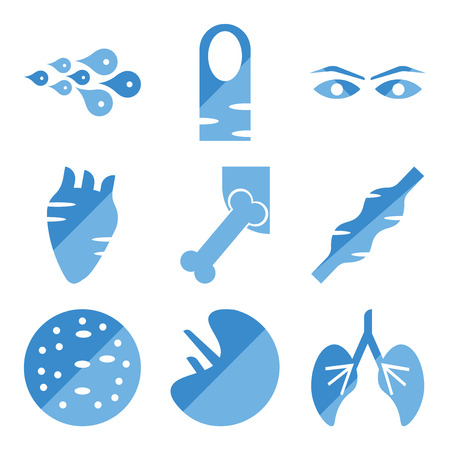 Set Of simple editable icons such as Human Lungs, Spleen, Basophil, Muscle, Hip Bone, Heart, Eyebrow, Long Nail, Skin Cells, can be used for mobile, web.