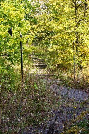 back to nature, overgrown stairway in the forest