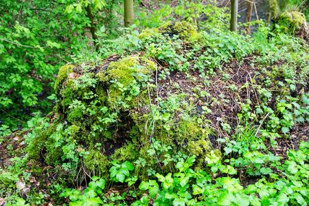 with moss and various plants overgrown tree stump