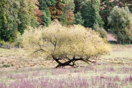 View of an unusually shallowly grown tree in autumn