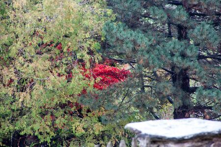 View into an autumn forest with coniferous and deciduous trees in different shades Stock fotó