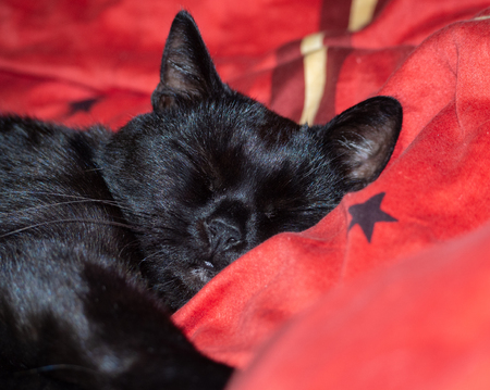Sleeping black cat Stock Photo