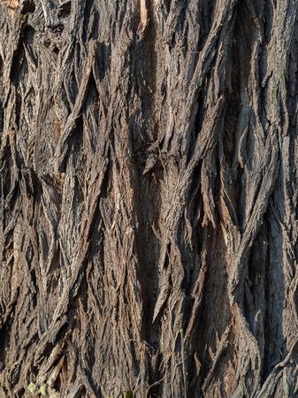 Bark of a robine tree Reklamní fotografie