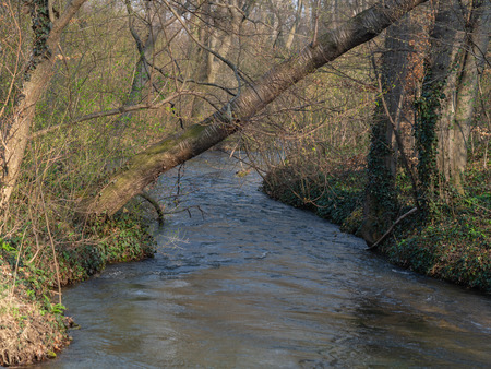 Little creek in forest in spring Stok Fotoğraf