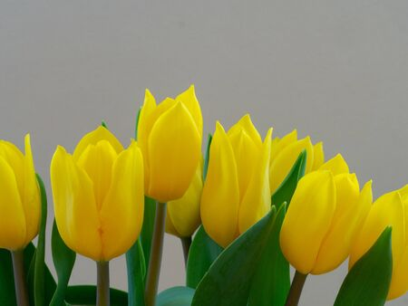 Bouquet yellow tulips close up Stock Photo