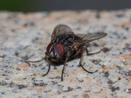 Macro of a fly on a stone