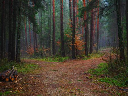 Forest path in a colored autumn forest