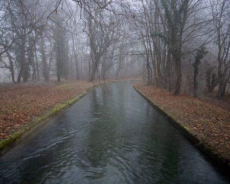 Small river in a forest on a foggy day