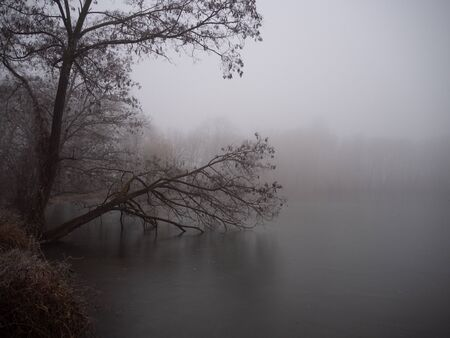 Pond in winter in a foggy forest Stock fotó