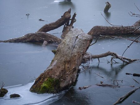 Piece of wood frozen in the ice of a pond